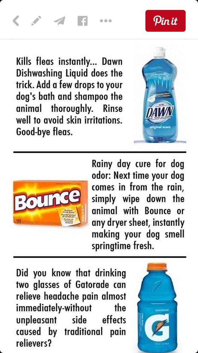 Dawn dish soap- kills fleas Dryer sheets- eliminates rainy day dog odor Gatorade- relieves headache pain