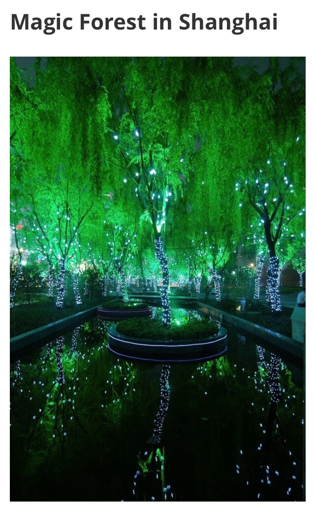 Magic forest in Shanghai that I didn't get to see?? I want a refund!