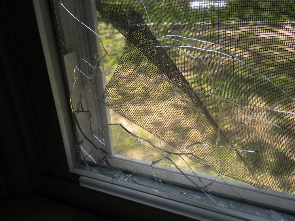 While not as dramatic as the picture above, weevils can enter your home through small cracks in a screen. They can also enter into door that might not have a tight seal. Check around your house for problem areas such as these and fix them up to avoid an infestation.