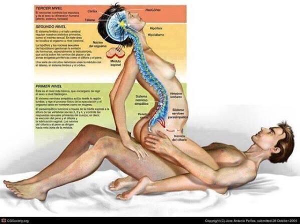 Как Секс Влияет На Наш Организм