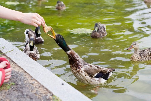 Head to a park and feed ducks!