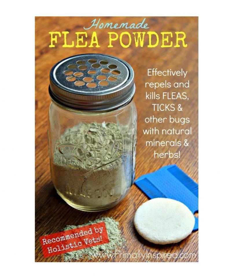 Homemade Flea Powder Recipe By Mau Lyn
