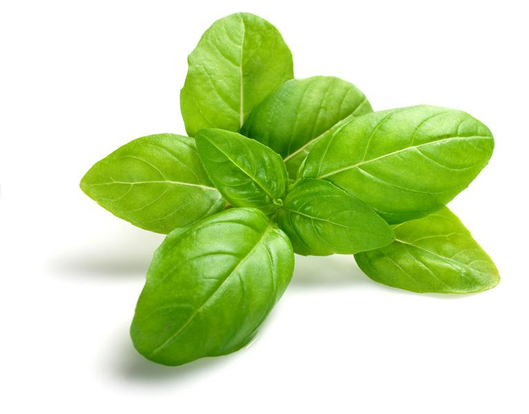Basil  Basil is wonderful to soothe insect bites and is ideal for sensitive skin
