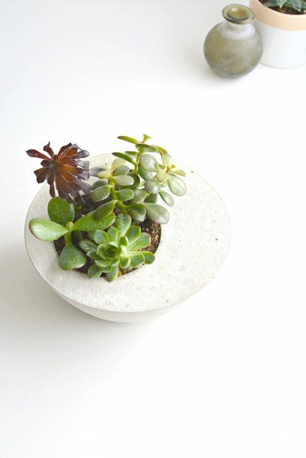 2 Bowls and Concrete -> Succulent Planter