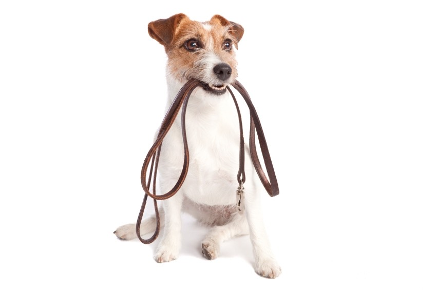 2.) Dog Walking  ask neighbors or friends if they need their dogs to be walked. or you can also ask neighbors if they need their pets watched while they are at work or on vacation