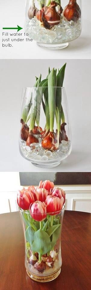 Go to Home Depot or any nursery and buy some bulbs and put them in a vase and add some marbles but don't put much water you don't want to drown them.
