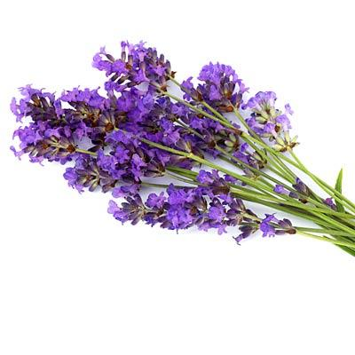 Lavender to sleep better Research shows that lavender increases brain alpha waves associated with relaxation and deep sleep. The do-it-all scent may also alleviate PMS symptoms and reduce pain.