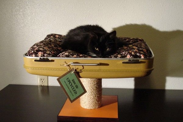 Or even a cat bed