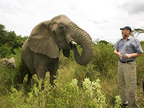 "Elephants are capable of human-like emotions such as feeling loss, grieving and even crying. They remember and mourn their loved ones, even many years after their death. When the ""Elephant Whisperer"" Lawrence Anthony (pictured here)  died, a herd of elephants arrived at his house to mourn him."