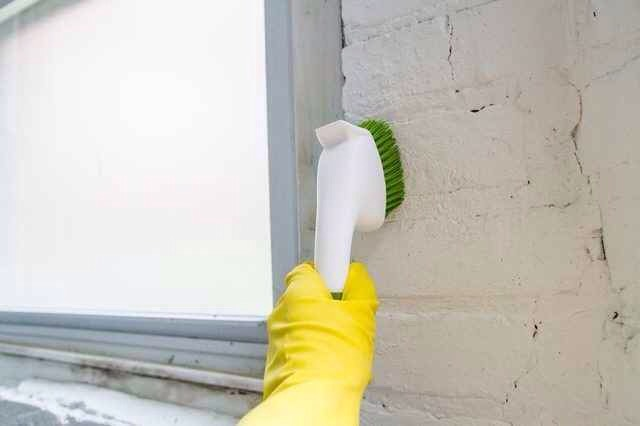 41.Scrub the mold off your basement walls with diluted detergent. Here'san in-depth explanation of how to do it, plus theEnvironmental Protection Agency's guideon dealing with mold like this.
