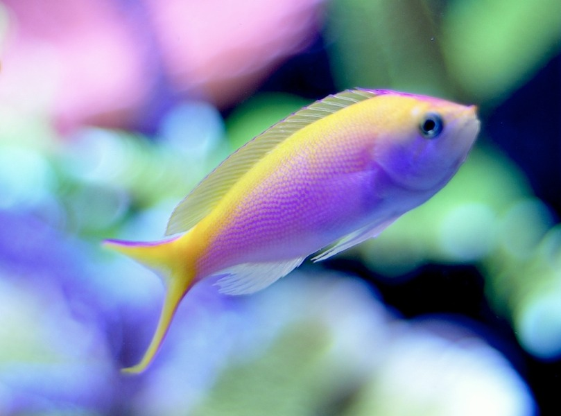 What do you call a fish without an eye?  A fsh!