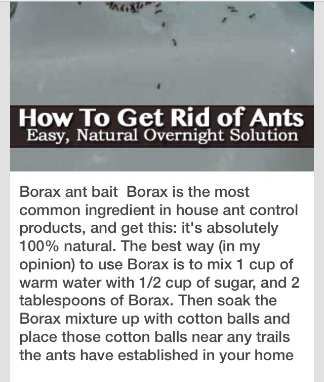 Natural Way To Rid Ants From Garden