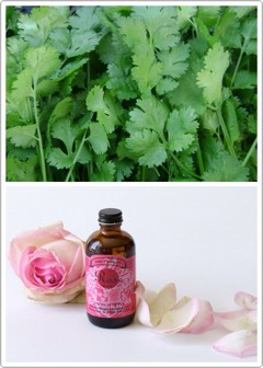 1️⃣2️⃣ | Forbeautiful lips, apply the mixture of coriander leaves + rose water on them.