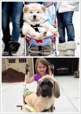 33.Pet Stroller If you need a stroller……for your pet…. $68.00