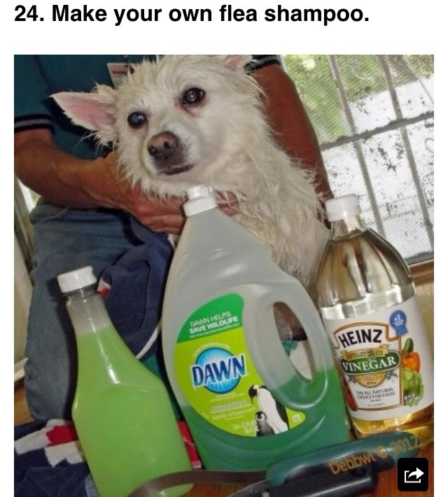 """1 cup Dawn, 1 cup vinegar, and 1 quart of warm water. Massage in and let it sit for five minutes. According to one testimonial, """"The fleas just floated in the water and died and best of all little Libby did not have any reactions at all to the process."""""""