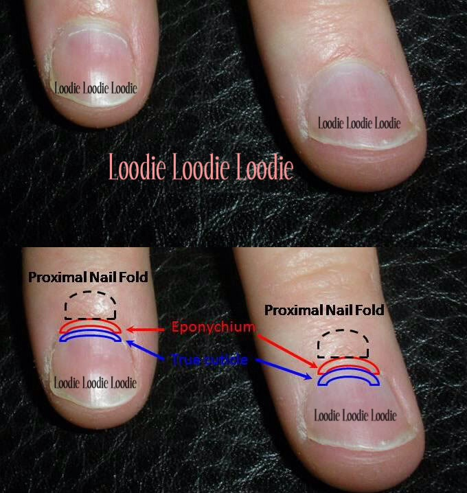 Pushing Your Cuticle Tips Back Makes The Nail Grow Faster! by Summer