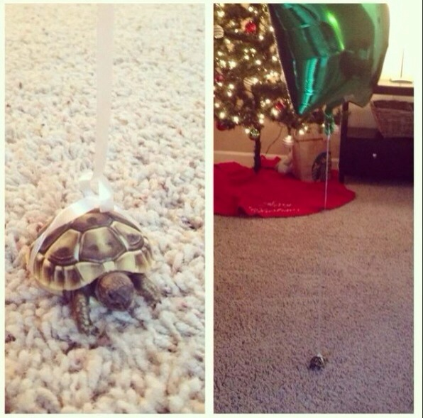 You won't loose your turtle 🐢🎈tie a balloon around your turtle