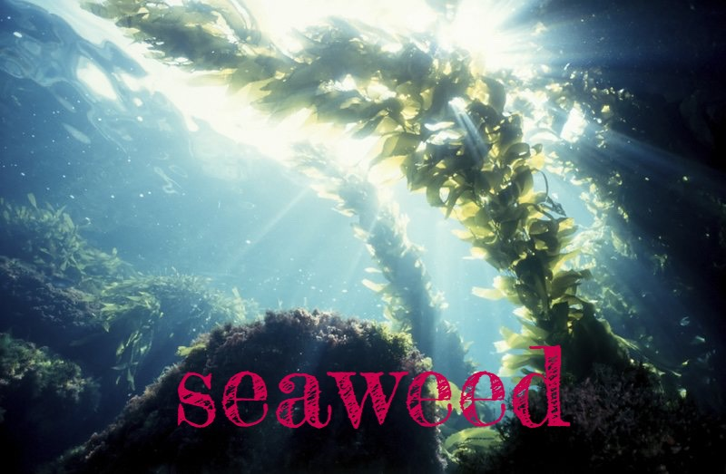 SEAWEEDnourishes skin with vitamins +minerals (including over 70 trace minerals) that support collagen production, plus polysaccharides + antioxidants.  Researchers found that a 1% extract ofFucus vesiculosus (type of brown algae/seaweed)supported collagen production when applied topically.This is huge asnot all nutrients are well absorbed byskin. Collagen is a perfect example – it's molecules are too large to penetrate the skin, so it just sits on the surface until it is rinsed away.