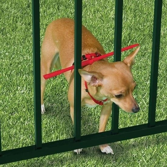 16. Invest in an escape-prevention harness if you have a small dog and a fenced-in yard. A little silly looking, but it's safer than risking a runaway dog. Buy it here. http://www.hammacher.com/product/82490