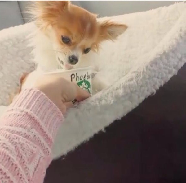 Next time you bring your dog to your local Starbucks, he can enjoy his very own puppuccino. And no, Starbucks is not feeding your dog caffeine. According to Cosmopolitan, a puppuccino is a mini Starbucks cup with some whipped cream inside.