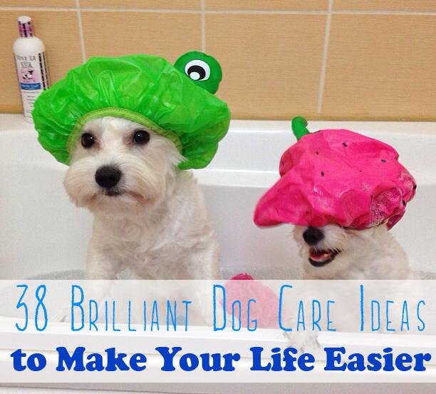 Here are some tips and tricks to make the rewarding task of caring for your dog just a tiny bit easier.