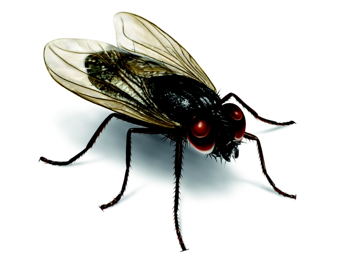 A group of flies is called a business