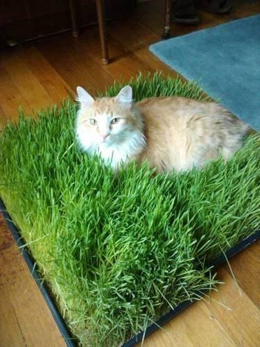 2. Make a tiny bed of grass for your cat to chill in.