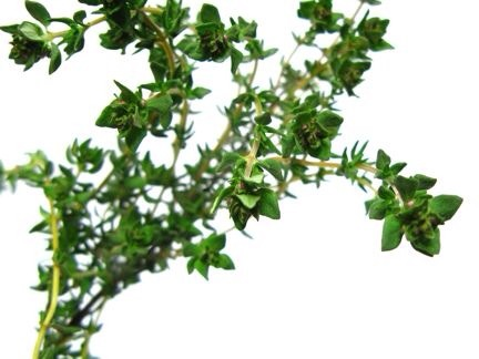 Thyme  Thyme makes a wonderful addition to any herb garden because it's so easy to take care of and can be used in so many ways in the kitchen. Plant in full sun and keep it well drained for best results. When harvesting, snip entire sprigs and take leaves of stems by gently running your fingers.