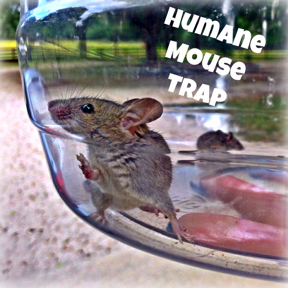 This mouse trap is easy, effective, and made from items you already have at home!
