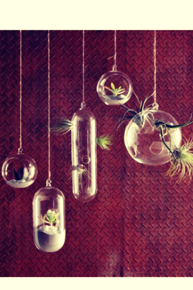 Floating Terrariums  These floating terrariums have a bubbly quality that dresses up any room of the house!