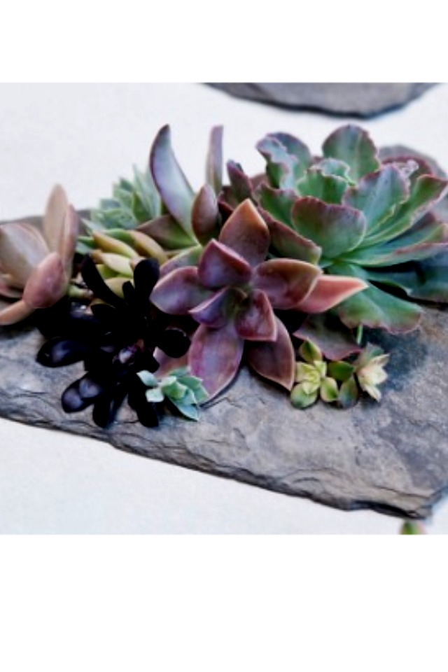 Slate  How cool is this slate garden? If the succulents are watered every once in a while they are able to live for months, no dirt necessary!