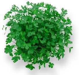 1 handful of parsley