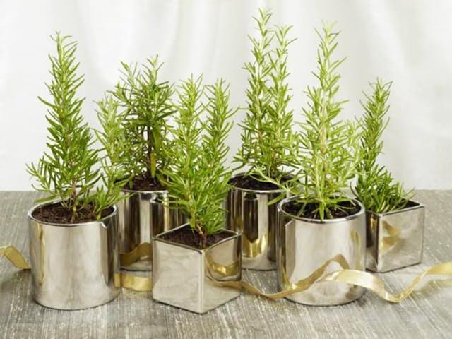 A grouping of herbs in matching containers you can find at a dollar store makes for a very simple but pretty and fragrant centerpiece, as featured onThe Food Network.