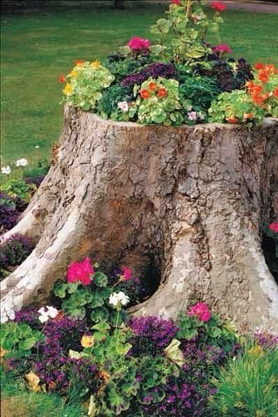 Creative Ideas To Turn Tree Stumps Into Gorgeous Planters 💚💚💚💚❤ 💖