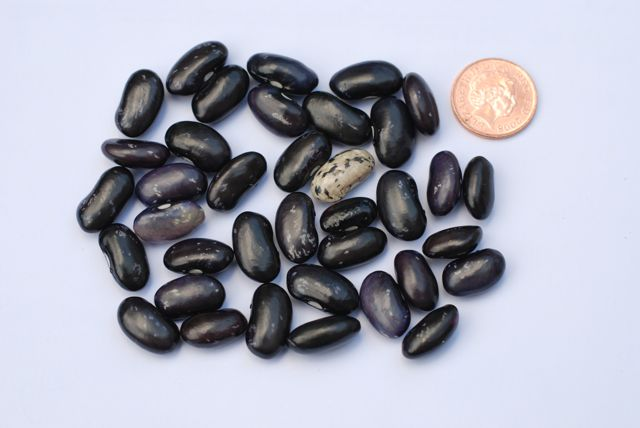 BLACK PINTO BEANS are under appreciated  despite being a great source of protein. They have no saturated fat, contain healthy carbs that dont spike your blood sugars, and are rich in soluble fibre that helps lower cholesterol.
