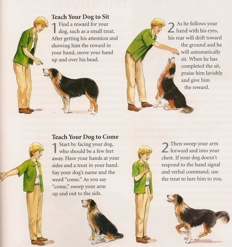 Police Dog Training Methods