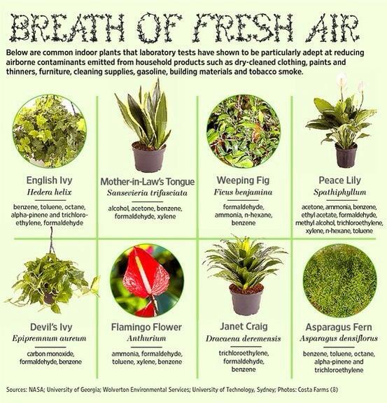 Breath Of Fresh Air Great Inside Plants