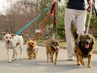 Walk dogs. It's good excersise AND it's fun!