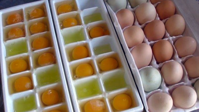 Store your eggs in the freezer in a ice cube tray To preserve them longer