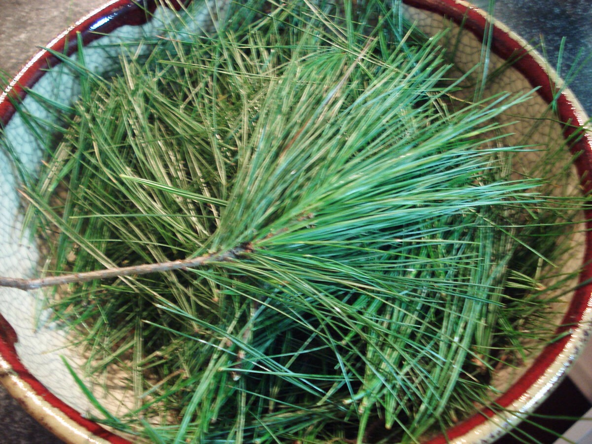 Pine needles ease congestion - pick up those pine needles on your floor right now, and add to some boiling water. Place a towel over your head and breathe in to relieve congestion. You can also sip pine needle tea.