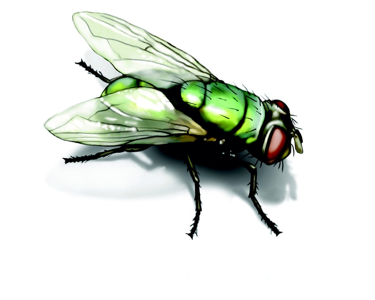 Purchase fly paper.. This can be found at hardware stores, department stores and home improvement retailers. Flies will stick to the paper and be unable to fly away.