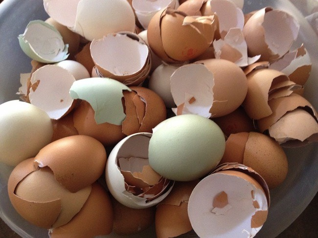 You can add fine egg shell powder to your coffee filter to make cheap coffee less bitter; boost your garden soil's calcium level by adding crumbled egg shells; add them to the bottom of potted plants that need extra drainage; or grind and add to pet food as an additional calcium supplement.