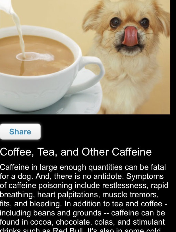 Caffeine in large enough quantities can be fatal for a dog. And, there is no antidote.