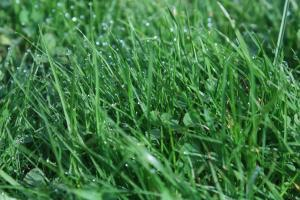 If your like most people your lawn is the  most important thing in landscaping, especially  If you have kids or pets . Even a weekend  Chore of moving your lawn could damage your lawn ... It compacts the soil resulting  In damage to the roots .