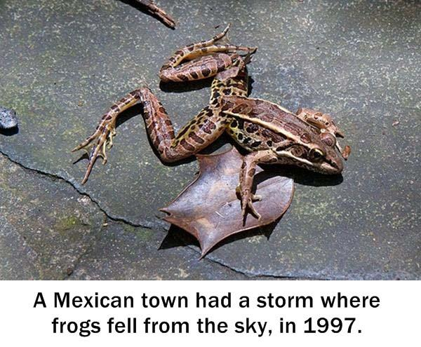 2.) I hope they liked frogs.