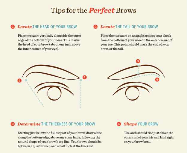 4. Learn brow terminology. The head is the part of your brow that's closest to your nose. The tail is the end that's furthest away.