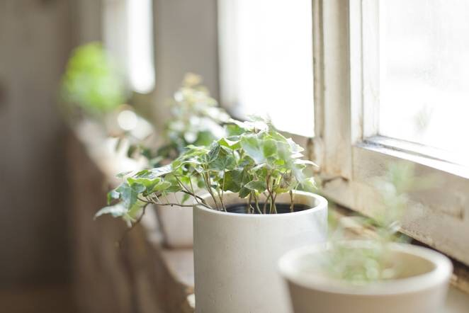 Stress Houseplants can contribute to a feeling of well being, making you calm and optimistic. Plus, plants have been known to lower blood pressure due to their stress-relievingnature.