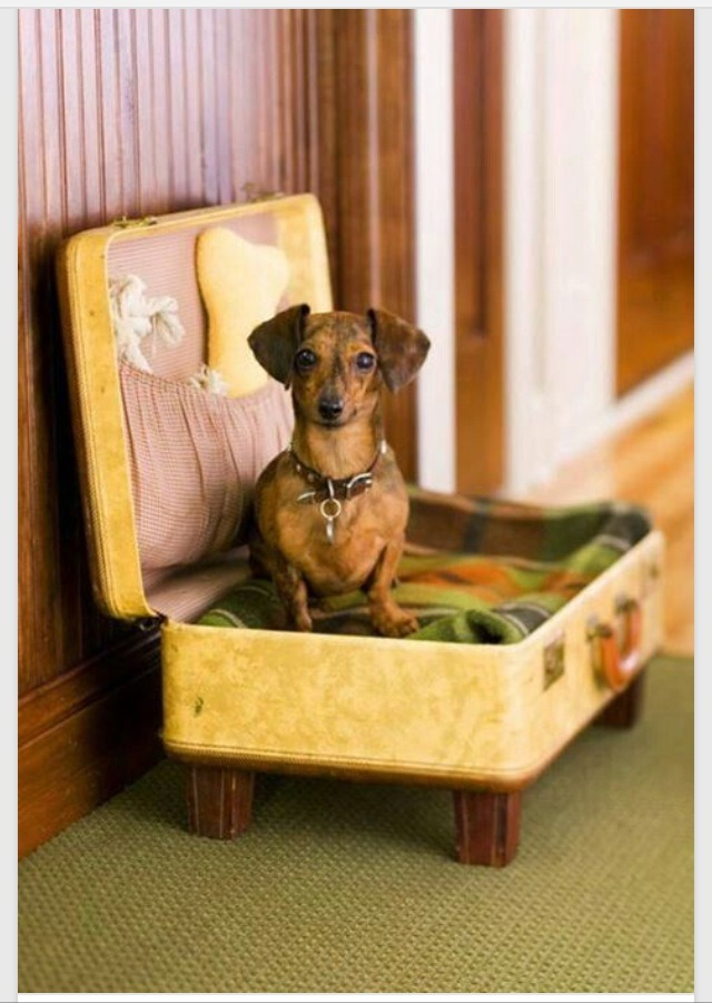 1. Repurpose an old suitcase into a dog bed: