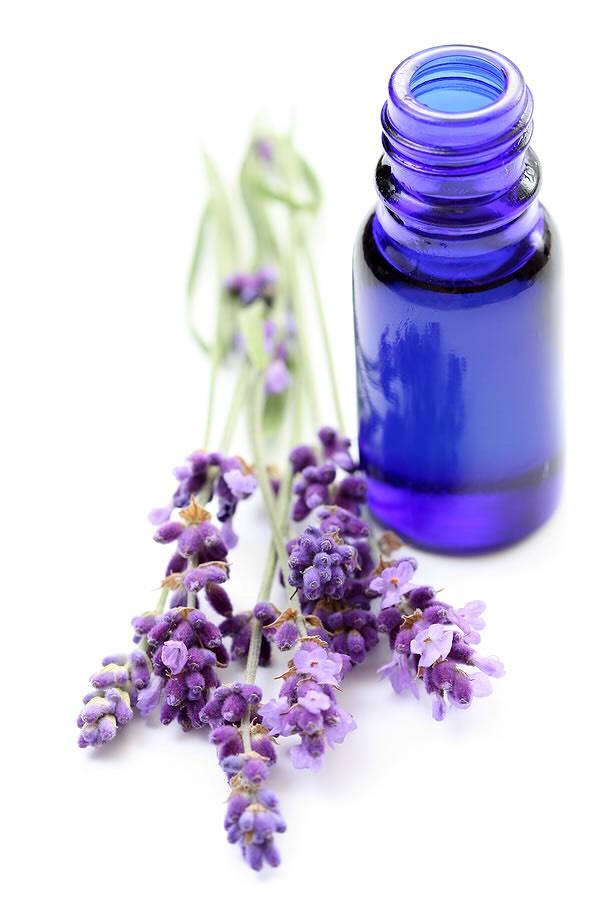 Use lavender oil for bug bites & stings.