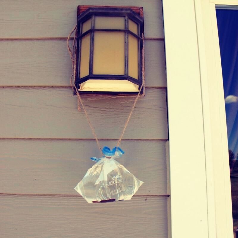 Fill a zip lock bag with water and 5 or 6 pennies and hang it in